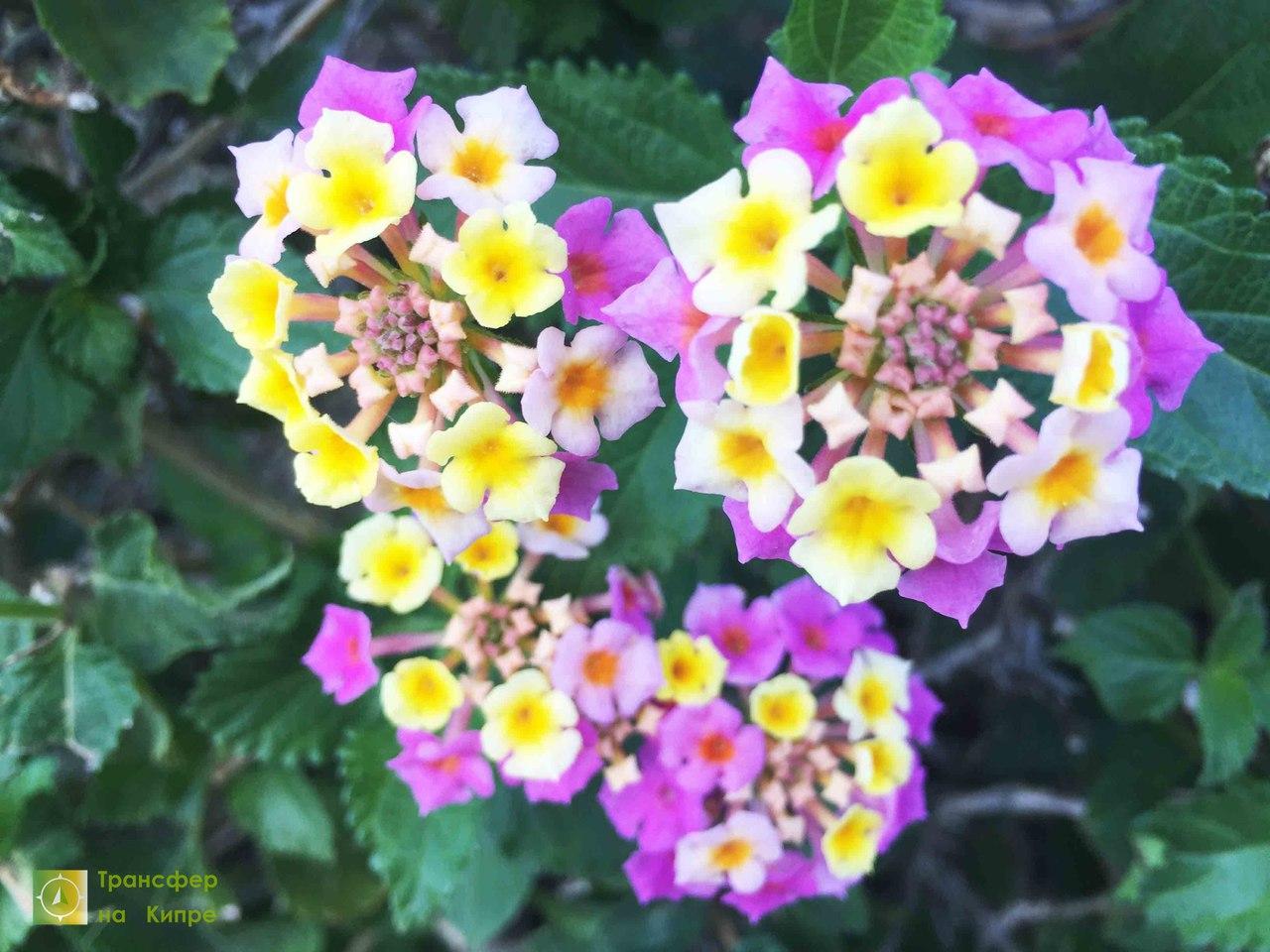 Цветок из дуремаров